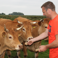 Mineralen zoogkoeien ervaring van vleesveehouder Jan Arends